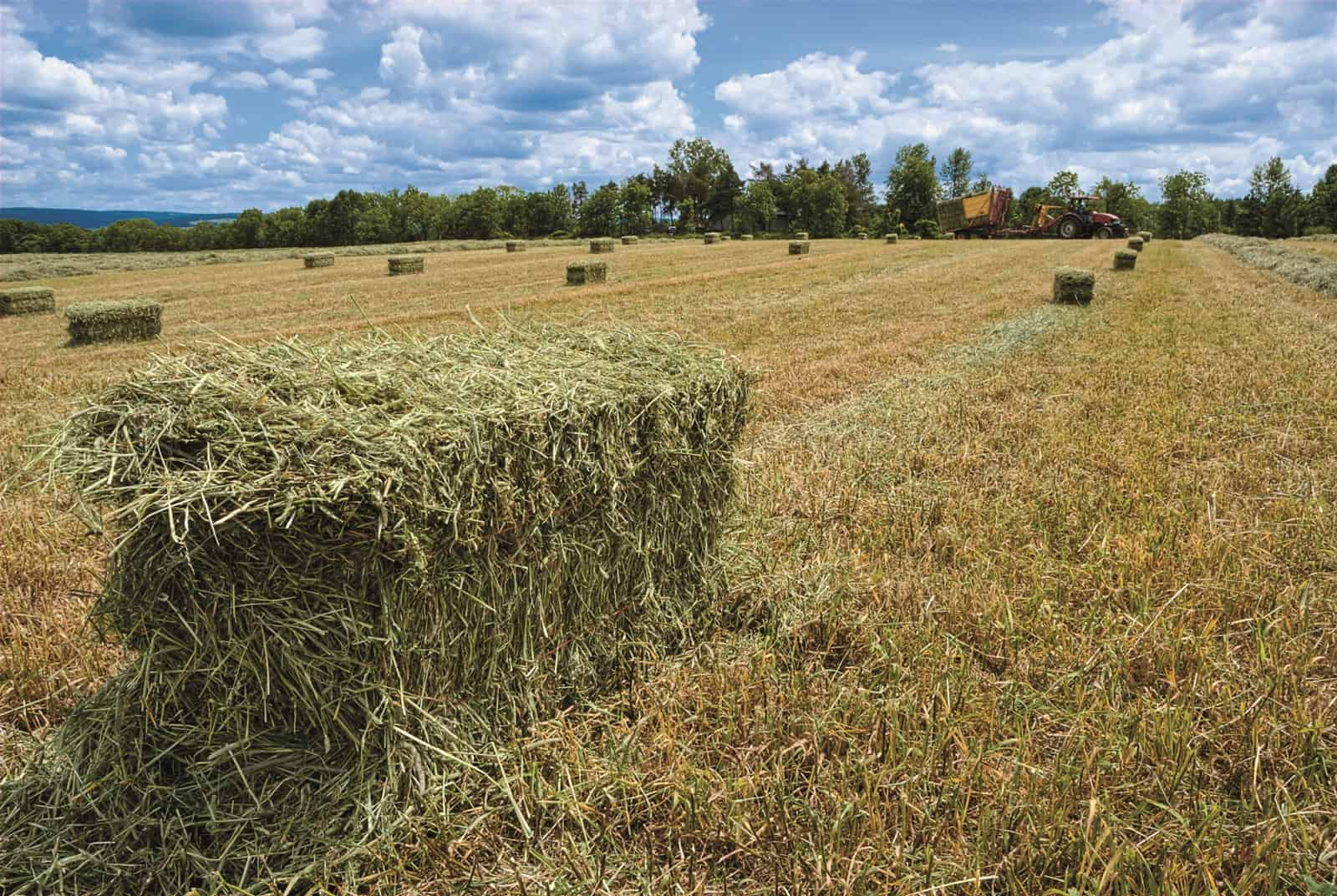 hay-bales-in-field-after-bailing